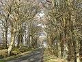 Garblie Wood - geograph.org.uk - 690971.jpg