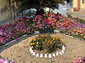 Garden (Tagetes erecta and Petunia) 14.jpg