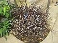 Gardenology-IMG 4784 hunt10mar.jpg