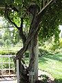 Gardenology-IMG 7842 hunt10aug.jpg