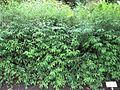 Gardenology.org-IMG 2125 rbgs11jan.jpg