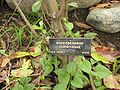 Gardenology.org-IMG 7512 hunt09jun.jpg