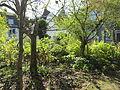 Garten Haus Hövener Brilon.jpg