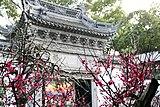 上海、豫園の梅
