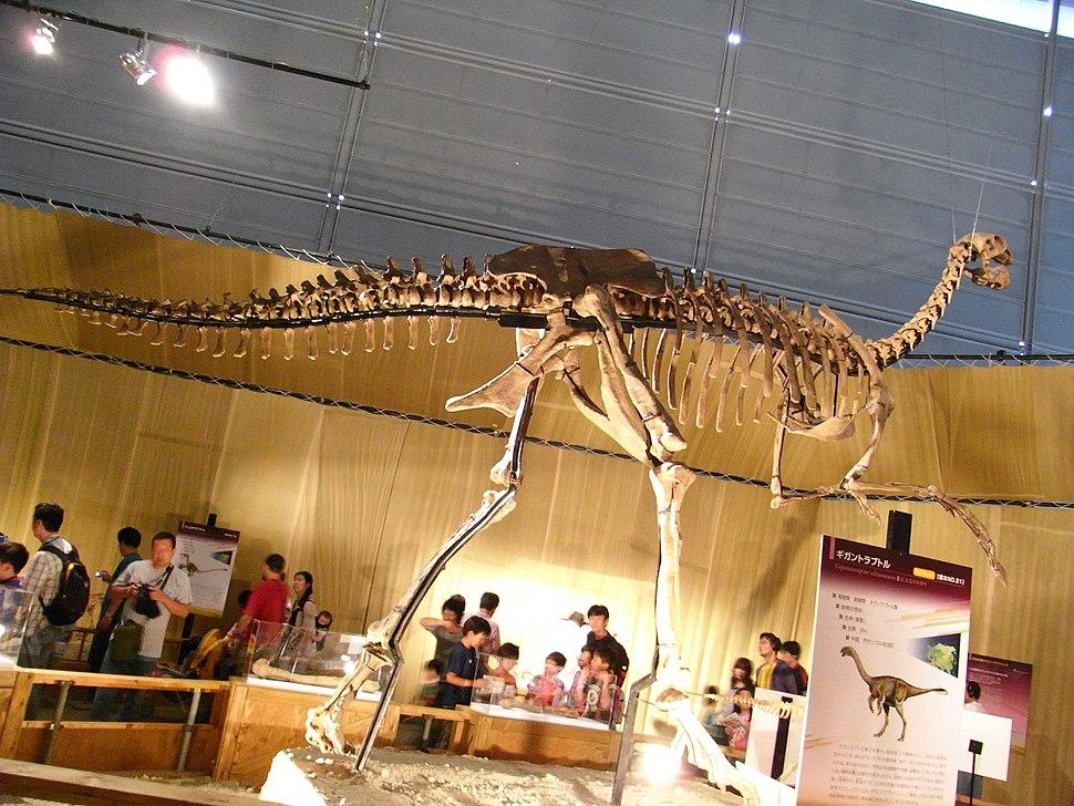 Gigantoraptor elrianensis skeleton