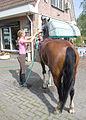 Girl washing her horse.jpg