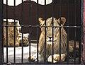 Giza Zoo 02.jpg