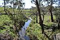 Glenlyon Loddon River 004.JPG