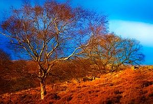 Goathland - Image: Goathland moor north yorkshire