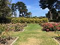 Golden Gate Park Rose Garden 3 2016-06-29.jpg