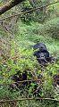 Gorilla teen.jpg