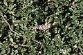 Grasshopper at Crag Ranch Park.jpg