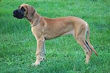 Blue Collar Dog Training