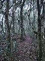 Great outdoors 08.jpg