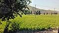 Green Fields of Swat.jpg