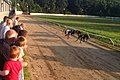Greyhound racing at the Valley Greyhound Stadium, Ystrad Mynach.jpg