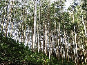 Gudalur, Nilgiris - Upper Gudalur