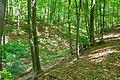 Höxter - 2018-05-20 - HX-001 Buchenwälder zwischen Ziegenberg und Langer Berg (019).jpg
