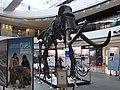 HK Central IFC mall exhibition 03 長毛象 Mammoth bones April-2012 象牙 Ivoy.JPG