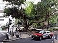 HK ML 香港半山區 Mid-levels 羅便臣道 Robinson Road near Old Peak Road n 雅賓利道 Albany Road April 2020 SS2 03.jpg