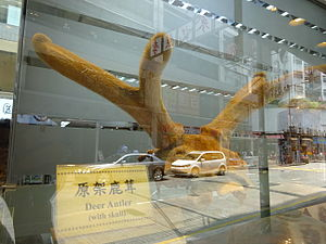 HK Sheung Wan Queen's Road West shop deer antler product window display July-2015 DSC.JPG