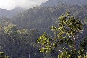 Tangkoko Batuangus Nature Reserve - Image: Habitat Tangkoko Sulawesi 2006