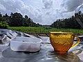 Hakuru with beli mal tea.jpg