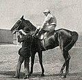 Handicapper (horse).jpg