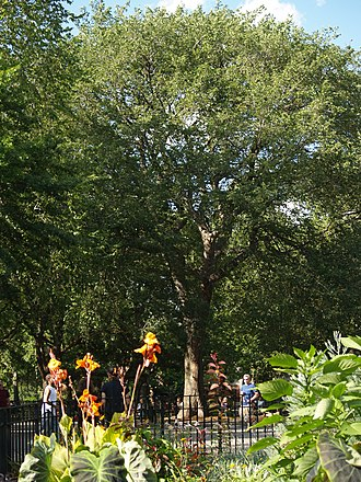 Hare Krishna (mantra) - The Hare Krishna Tree, an American Elm in Tompkins Square Park, New York City, under which Bhaktivedanta Swami Prabhupada began the first recorded public chanting of the Hare Krishna mantra outside India.