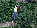Hedge trimmer, Kigali.jpg