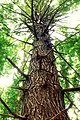 Hemlock Ridge Preserve (Revisited) (5) (15316923505).jpg