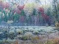 Herbst am Alten See.jpg