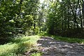 Hickory Hill old driveway.jpg
