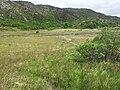 Hochmoor Snowdonia.jpg
