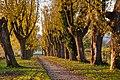 Hohenheim botanical garden allee 2013 01.jpg