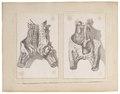 Homo sapiens - 1700-1880 - Print - Iconographia Zoologica - Special Collections University of Amsterdam - UBA01 IZ19600091.tif