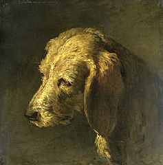 Head of a Dog
