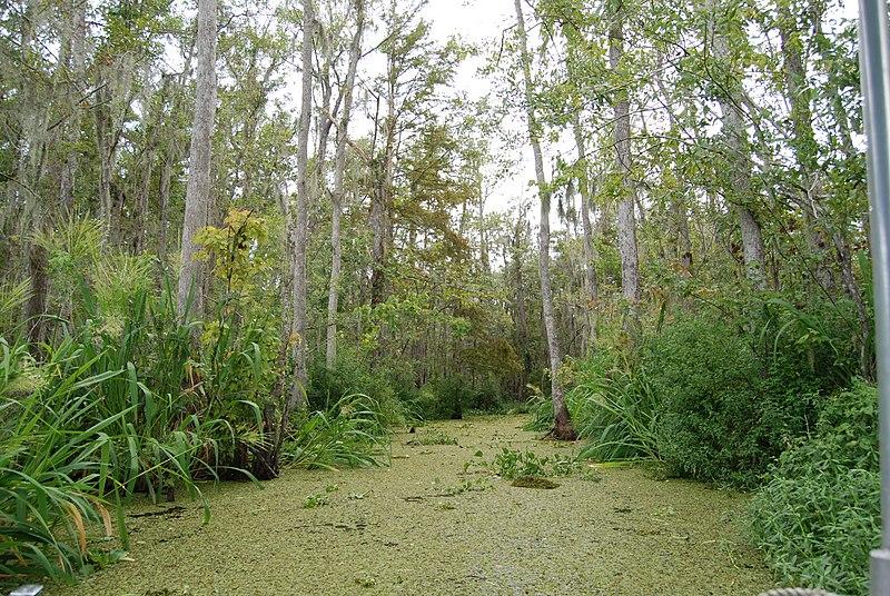 File:Honey Island Swamp, Louisiana (paulmannix).jpg