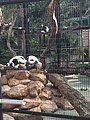 Hong Kong Zoological and Botanical Gardens 17.jpg