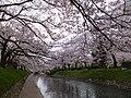 Honmachi, Toyama, Toyama Prefecture 930-0029, Japan - panoramio (8).jpg