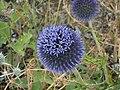 Honney Bee - panoramio.jpg