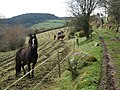Horses by the track, Northwood - geograph.org.uk - 711539.jpg