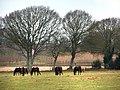 Horses grazing - geograph.org.uk - 708988.jpg