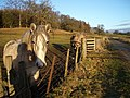 Horses near Blair Castle - geograph.org.uk - 105980.jpg