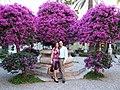 Hotel San Domenico-Taormina-Sicilia-Italy - Creative Commons by gnuckx (3666535403).jpg