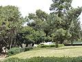 Hussamssa Garden P1220367.JPG
