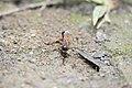 Hymenoptera (42594913200).jpg
