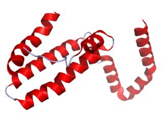 Interleukin 10 mammalian protein found in Homo sapiens