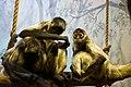 IMGP1865-1 Valentine's Day in the zoo (4521427455).jpg