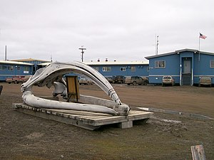 Bowhead whale skull in front of Ilisagvik Coll...